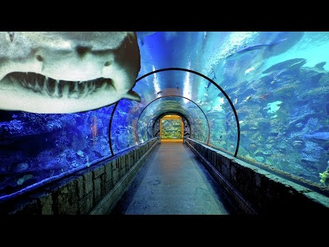 Mandalay Bay Reef Aquarium. Las Vegas Family Vacation