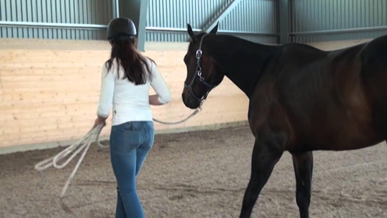 häst sex
