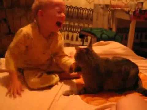 Cat Vs Baby Youtube