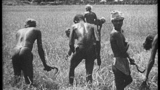 Peaceful Sri Lanka (Ceylon) in 1948