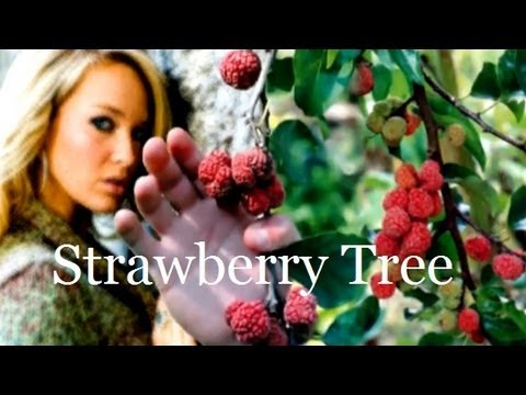 Plant a Strawberry Tree Fruit Tree