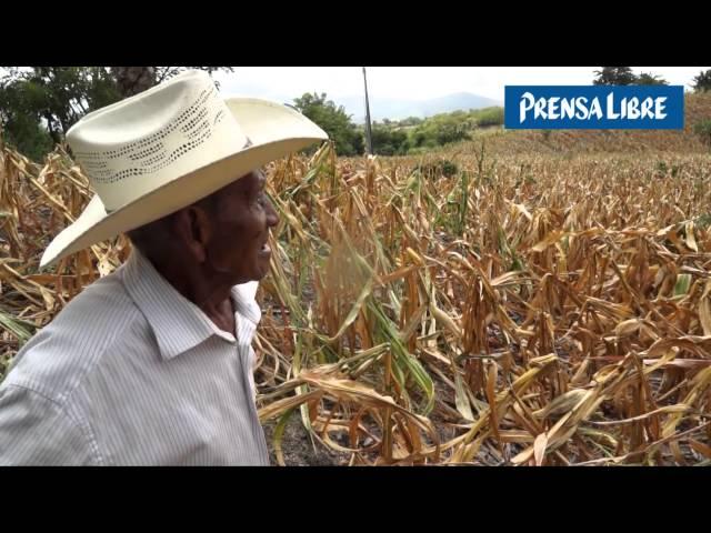 Sequía agobia a agricultores en el Corrredor Seco