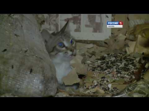 Квартира-свалка: Как в Перми расселяли «кошкин дом»