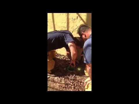 Duckling rescue in San Luis Obispo