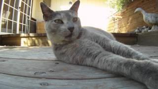Smokey The Cat - Filmed with GoPro HD Hero
