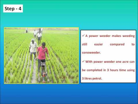Direct seeding in rice.wmv
