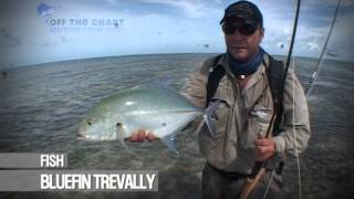 Bluefin Trevally: fly fishing the flats: Seychelles
