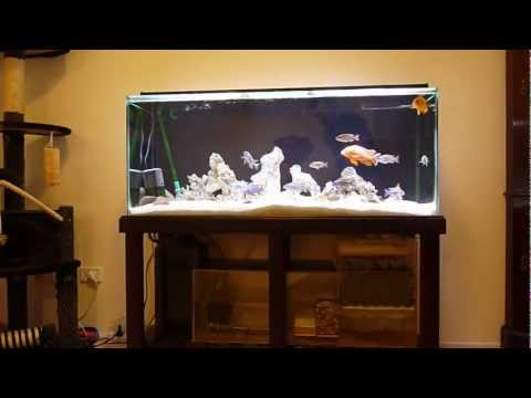 Cichlid Tank with DIY Wet Dry Trickle Filter and O