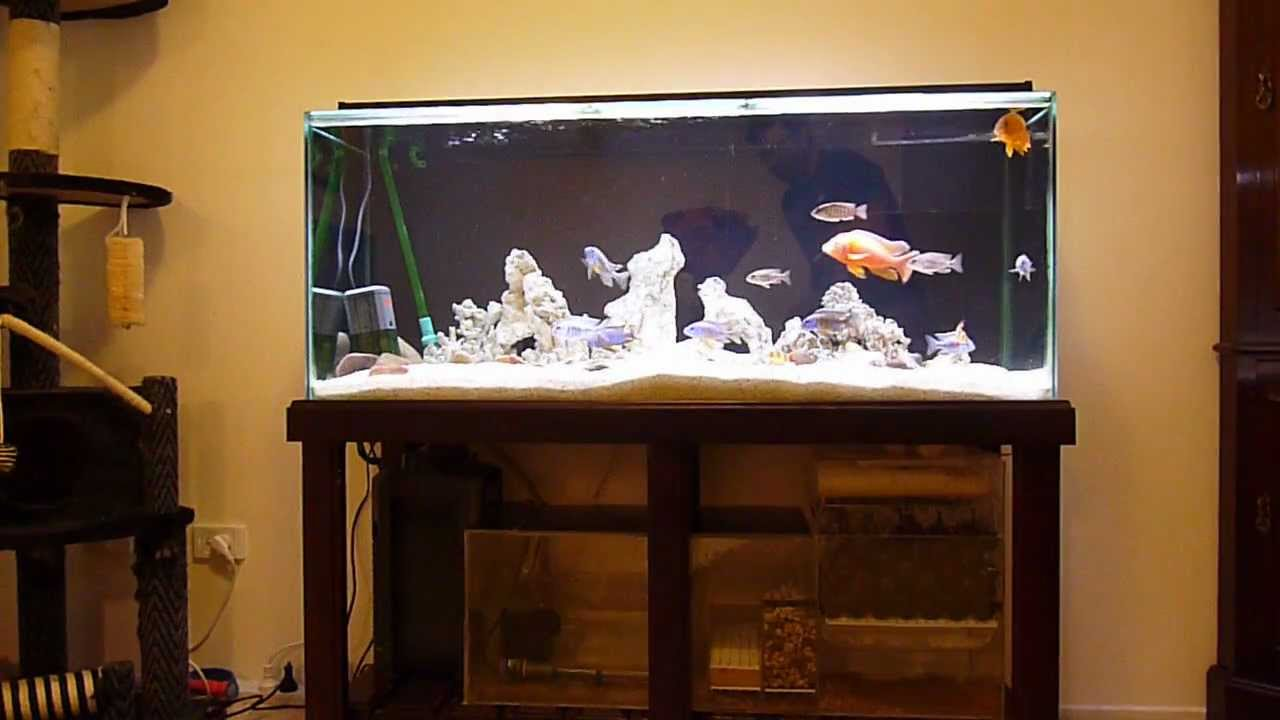Cichlid Tank With Diy Wet Dry Trickle Filter And O Youtube