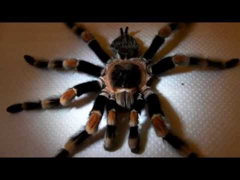 What to do with Dead Tarantulas?