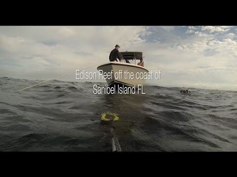 Spearfishing at the Edison Reef off Sanibel Island FL