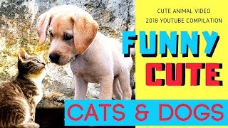 Funny Cat & Dog Videos [ CUTE ANIMALS ] for Kids!