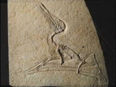 The Origin of Pterosaurs from Evolution: The Grand Experiment Book and Video Series
