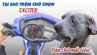 Tại sao Trộm chó dùng Exciter mà không chạy Raider hay Winner để cứu mạng?