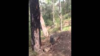 Knapsack Stringline Downhill trail preview