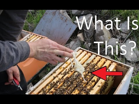Cody's Bees May 2nd 12017; Splitting Hive
