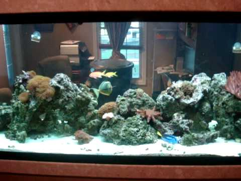 Tanks Dividers 210 Room Dividing Reef Tank