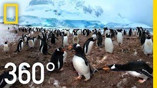 360° Antarctica - Unexpected Snow | National Geographic