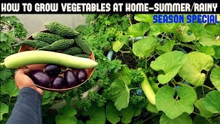 How To Grow Vegetables in Containers-Summer/Rainy Season Special