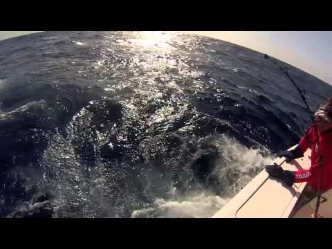 Veni Vidi Fishi - Antigua & Barbuda 47th Annual Sport Fishing Tournament