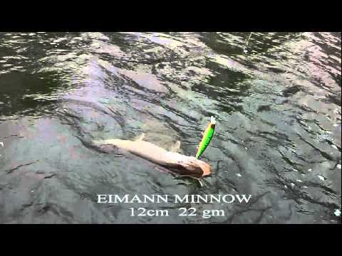 Izumi Eimann Minnow 120