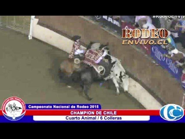 CHAMPION DE CHILE 2015 - Rodeoenvivo cl