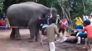 elephant delivery video