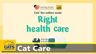The five welfare needs for cats: right vet care - cats for kids