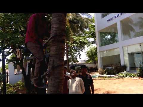 Grassroots innovations - Coconut / Palm tree climbing apparatus