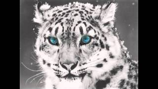 Watch Shearwater The Snow Leopard video