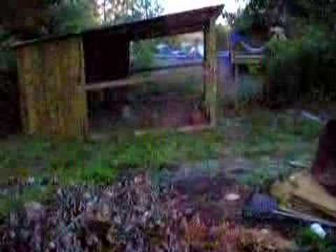 Chicks,Rooster Fighting,Chicken House Video