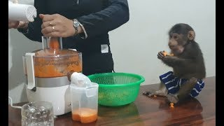 Mom Makes Carrot Juice For Monkey Doo With A Juicer