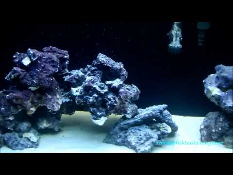 29 gallon saltwater reef aquarium..A good H.O.B. protein skimmer