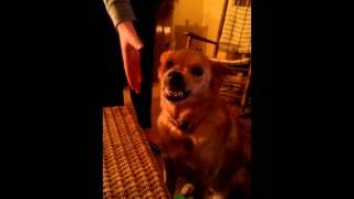 Tenny the silliest dog around
