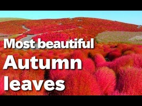 Cánh đồng hoa đẹp nhất thế giới :o