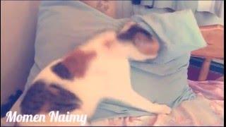 Cute cat loves a pillow #