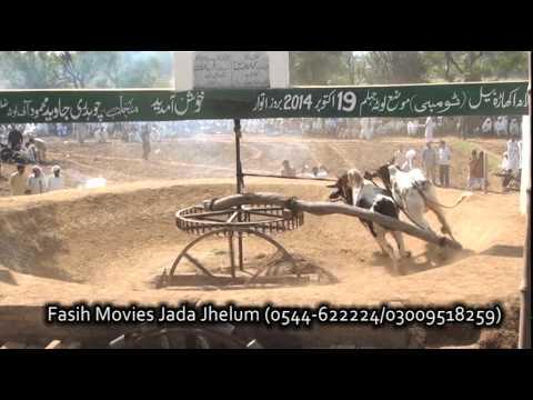 Bull Race Jhelum lota 2014 part 2