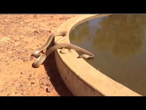 Las 10 serpientes mas venenosas del mundo