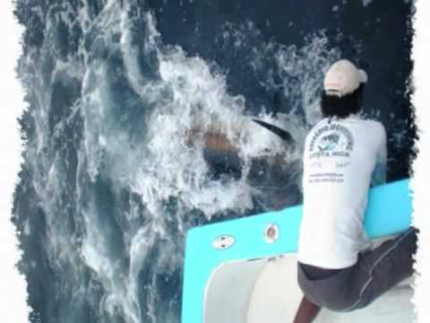 400 pounds black marlin by Papagayo Fishing Charters
