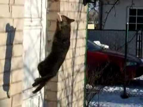 Голодный котэ.