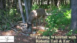 Robotic deer decoy