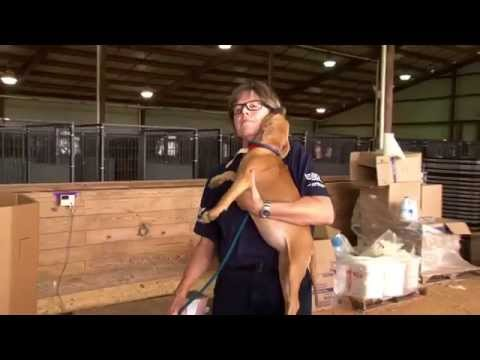 Dogfighting Rescue Saves 367 Dogs