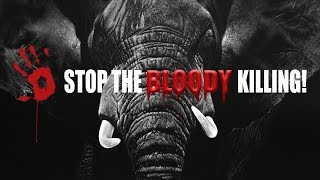 Stop the bloody killing