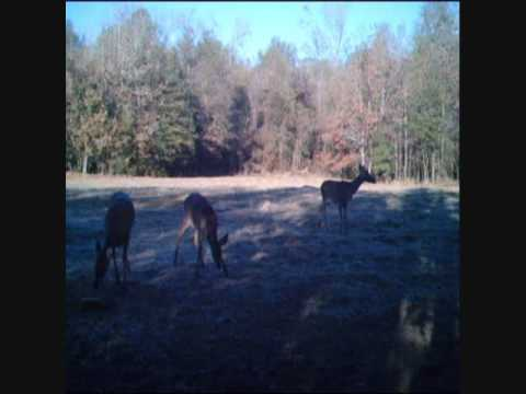 Alabama disabled hunting license download free apps for Alabama non resident fishing license