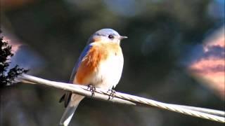Watch Kasey Chambers Bluebird video