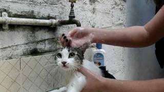 Gata Fala Que Banho É RUIM!