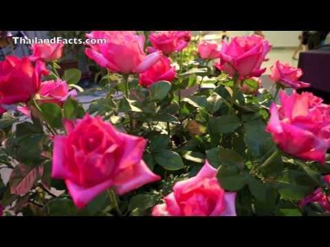 Botanical Gardern & Flowers  CentralWorld Bangkok
