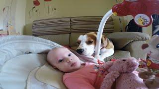 Cachorro ajuda mãe a trocar o bebê!