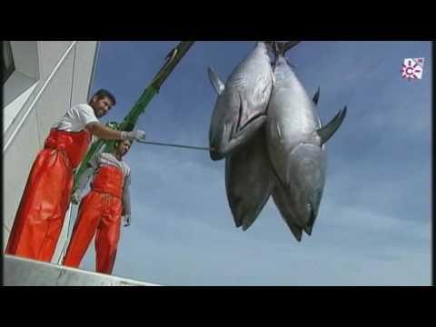 El atún rojo de almadraba