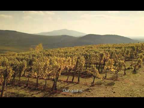 Wines of Hungary - Tokaj Wine Region